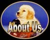 golden retrievers, golden retriever breeder, golden retriever puppies, lyric goldens, About Us