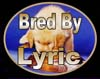 golden retrievers, golden retriever breeder, golden retriever puppies, lyric goldens, Bred By Lyric