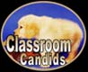 golden retrievers, golden retriever breeder, golden retriever puppies, lyric goldens, Classroom Candids