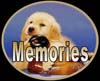 golden retrievers, golden retriever breeder, golden retriever puppies, lyric goldens, Memories