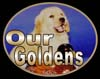 golden retrievers, golden retriever breeder, golden retriever puppies, lyric goldens, Our Goldens