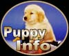 golden retrievers, golden retriever breeder, golden retriever puppies, lyric goldens, Puppy Information