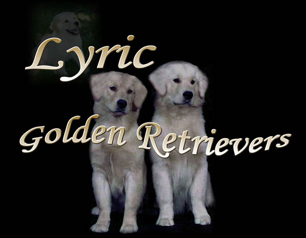 golden retrievers, golden retriever breeder, golden retriever puppies, lyric goldens, logo